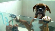 In Seoul werden Haustiere geklont