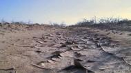 Die Pistazienbauern im Iran leiden unter einer Dürre