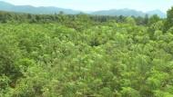 Regenwaldschutz für die eigene Gesundheit