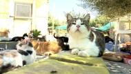 Zypern hat ein Katzenproblem
