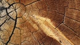 Lernen von den Wirbeln im Holz