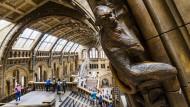 Im Natural History Museum in London erinnern nicht nur die Primaten an den Säulen an unsere Verwandtschaft mit dem Tierreich.