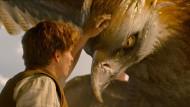Newt Scamander (Eddie Redmayne) hat ein Händchen für Tiere – auch für den Donnervogel Frank