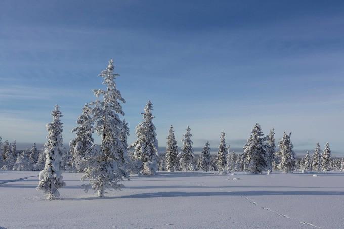 Je härter das Klima, desto härter die Pflanzen: Nadelwald in Finnland.