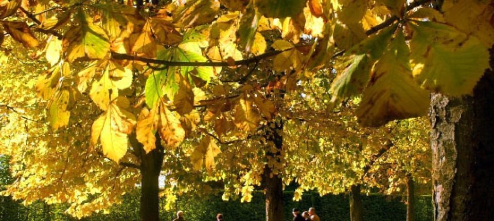Biophysik: Wie Bäume Wasser saugen - Physik & Mehr - FAZ