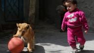 Löwenjunge aus Gaza leben jetzt in Jordanien