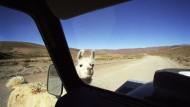 Die Landschaft Patagoniens. Auch hier dominieren die Pampas
