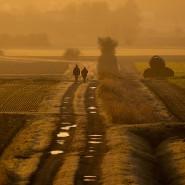 Spaziergänger mit Hund im Licht der aufgehenden Sonne auf einem Feldweg bei Seelze