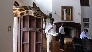 Wir atmen Giraffe