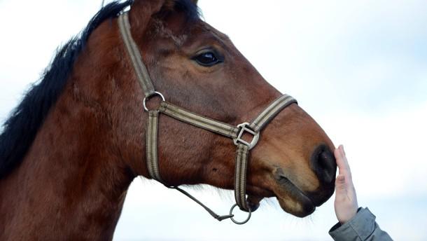 Untersuchungen nach nicht deklariertem Pferdefleisch gehen weiter