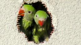 Sing lauter, Vogel, oder stirb