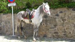 Das Pferd parkt vor dem Museum
