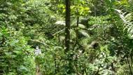 So undurchschaubar wie ein Regenwald