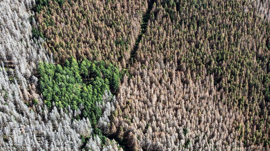 Die Farbskala des deutschen Waldes wird immer deprimierender.