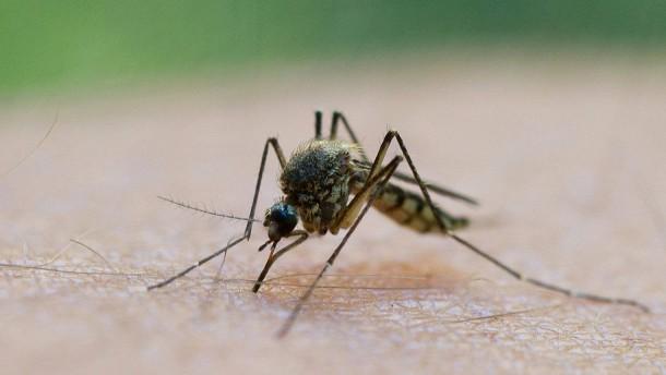 Resistenter Malaria-Erreger breitet sich aus