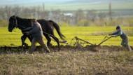 Rumänische Farmer in Solesti, einem Dorf 400 km nördlich von Bukarest
