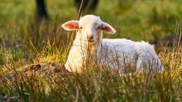 Kapitalerhöhung für den Öko-Landbau