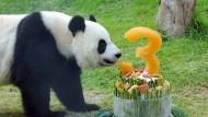 Heute kann es regnen, stürmen oder schnei'n: Riesenpanda Xin Xin feiert ihren Geburtstag im Zoo von Macau.
