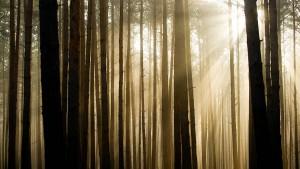 Welche Art von Wald wollen wir?
