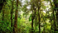 Illegale Holzfäller schrecken nicht vor Mord zurück: Der tropische Regenwald und seine Bewahrer brauchen Hilfe.