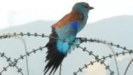 Der Krieg am Hindukusch aus der Vogelperspektive