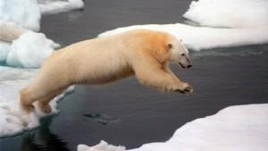 Lass mich dein Eisbär sein