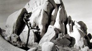 Ansel Adams - auf der Klaviatur der Graustufen