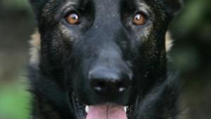 Auch Schoßhunde ein Sicherheitsrisiko?