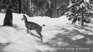 """Doch, es gibt auch Schnee in Kalifornien: ein Postkartenmotiv des mysteriösen Fotografen Gabriel Gordon Blackshaw, um dessen Bilder der Roman """"Winterjahrbuch"""" kreist."""