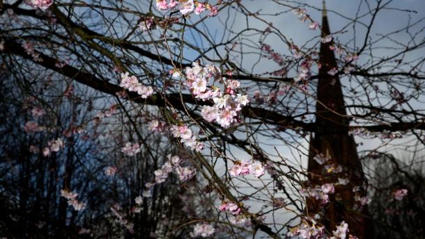 Frühlingswirren