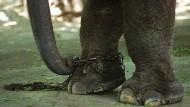 Eine Parabel auf den Wählerglauben an die Bedeutung seiner Stimme? Elefant im Zoo von Bombay