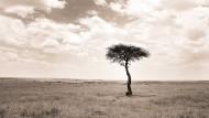 Wer ist schon gern dauerhaft allein? Nur diesen Baum in Kenia scheint es nicht zu stören.