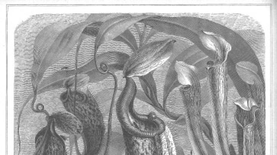 Die Pflanzenwelt ist Darwins unbekanntere Heimat