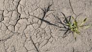 Schon im Frühjahr war der Ackerboden von der Trockenheit gezeichnet: Feld in Brandenburg Ende April 2020.