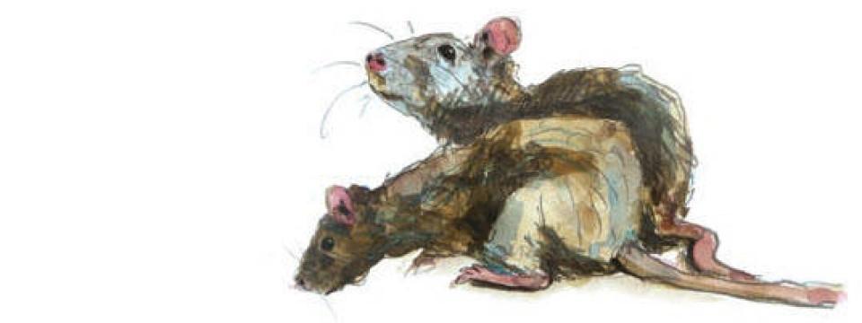 """Très Der Rattenfänger von Hameln"""" in aller Welt: Unverhoffte Geschenke  XA17"""