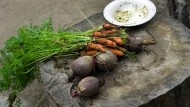 Wurzelgemüse, die Underground-Beilage: Vielen waren Karotte, Pastinake und ihre Verwandten nicht fein genug für den gutbürgerlichen Tisch. Gut, dass sich das gerade ändert.