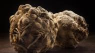Fermentiert, konfiert oder ausgebacken: Was Andree Köthe und Yves Ollech aus Sellerie machen, kann sich schmecken lassen.