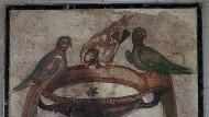 Auch in Pompeji umgab sich der Mensch mit Tierbildern, um sich selbst besser zu erkennen.