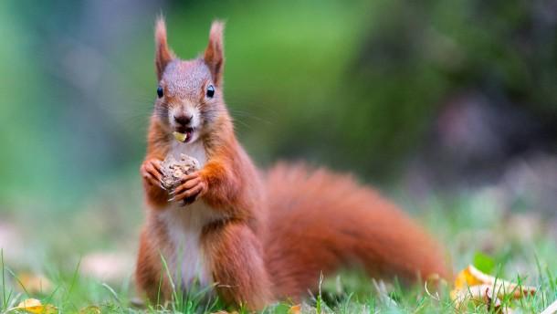 Mensch, du Eichhörnchen!