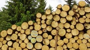 Das Buzzword Nachhaltigkeit