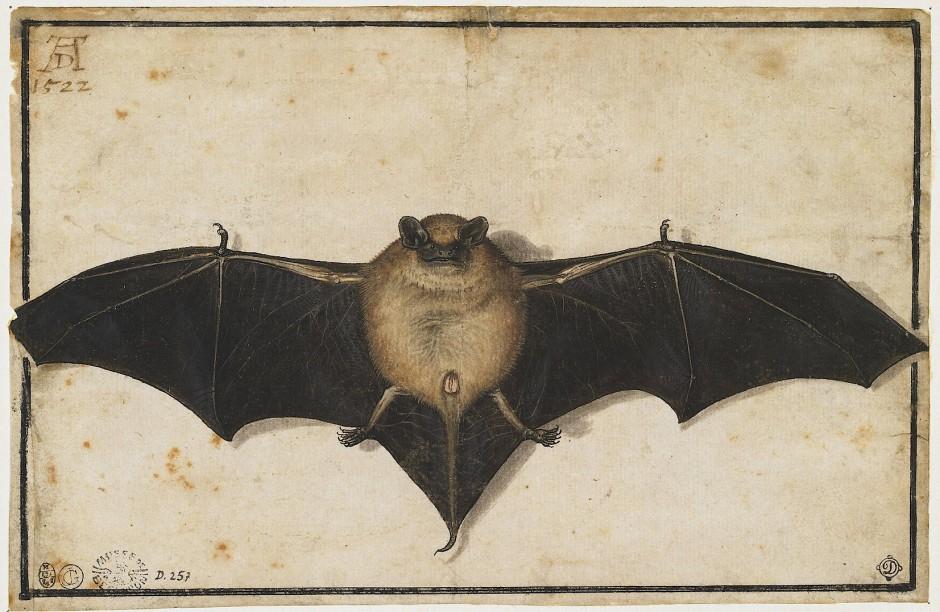 Ihre Schwingen sprengen den Rahmen des Blatts: Aquarell einer Fledermaus, früher Albrecht Dürer zugeschrieben