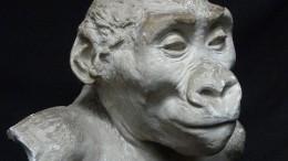 Die Seele des Gorillas