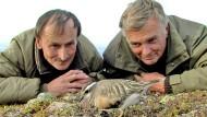 Immer ganz nah dran: Die Tierfilmer Hans Schweiger (links) und Ernst Arendt an einem Nest eines Mornellregenpfeifers (Charadrius morinellus).