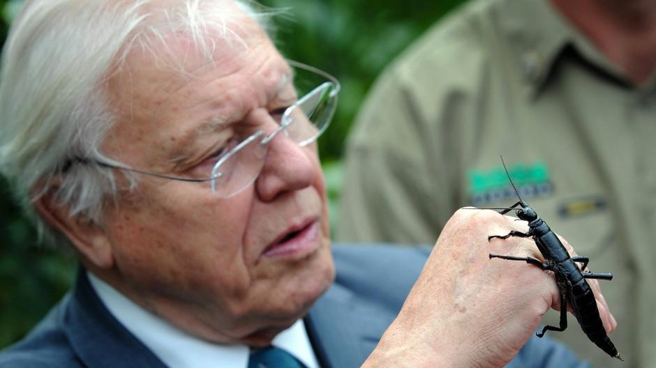 Kesser Käfer? Nicht ganz. Der Baumhummer, mit dem Sir David Attenborough gerade Bekanntschaft schließt, gehört zur Ordnung der Gespensterschrecken.