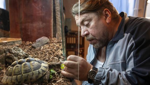 Wettlauf der Schildkröten