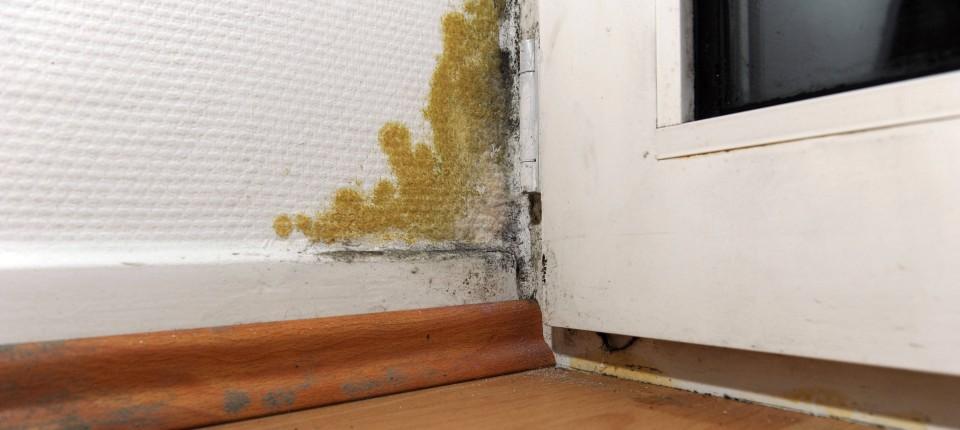 Welche Rechte und Pflichten haben Mieter bei Schimmel in ihrer Wohnung?