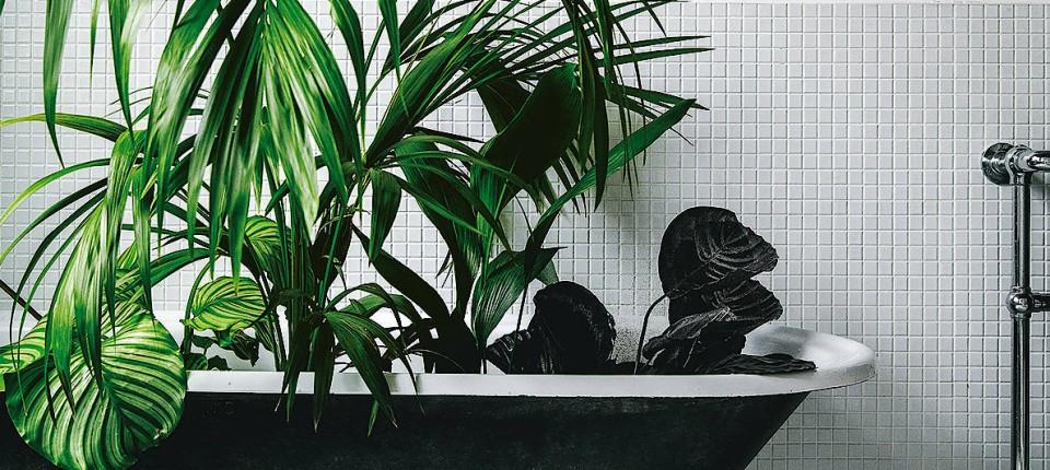 Zimmerpflanzen Im Trend   Die Grüne Welle
