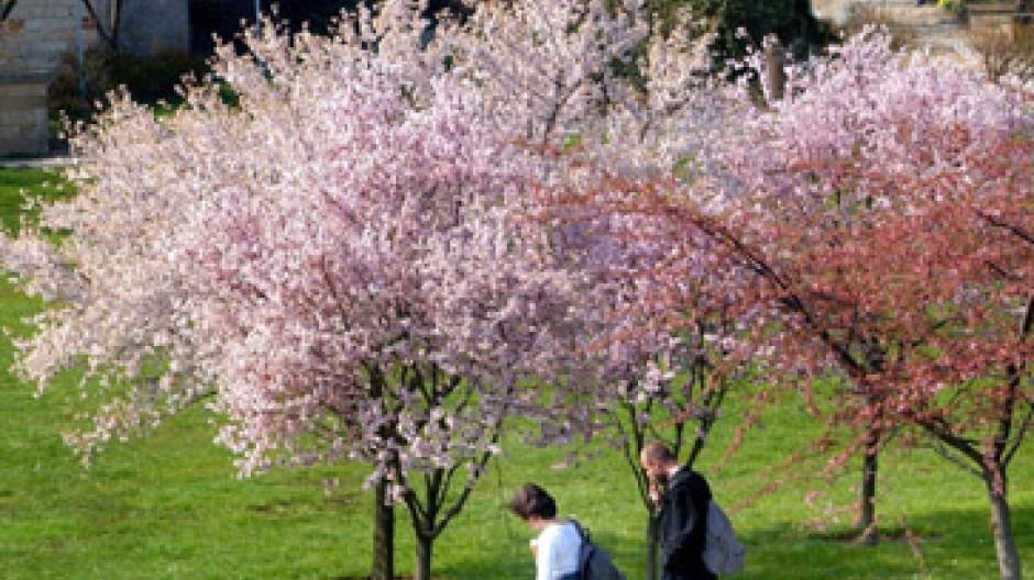 Der Frühling - eine spannende Jahreszeit auch an der Börse