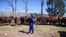 Land-Enteignungen könnten Südafrika teuer zu stehen kommen
