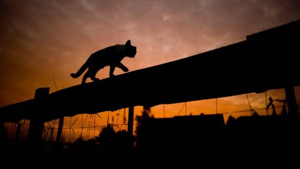 Frau muss Behandlungskosten für Streunerkatzen tragen